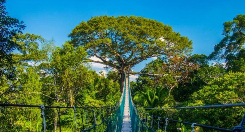 Desde los puentes colgantes se aprecia una vista espectacular de la vida silvestre. (Foto: Shutterstock)