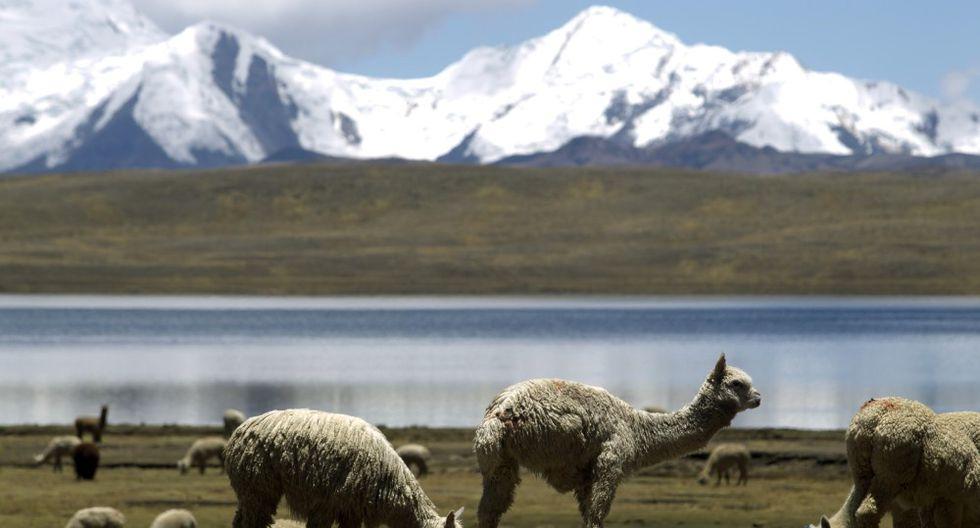 Arequipa: empieza la evacuación de ganado afectado por volcán - 2