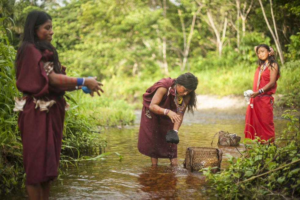 """El estudio da cuenta de la revisión de más de 300 informes publicados en la dos últimas décadas. """"Los pueblos indígenas y tribales, y los bosques en sus territorios, cumplen un papel vital en la acción climática global y regional, y en la lucha contra la pobreza, el hambre y la desnutrición. Sus territorios contienen alrededor de un tercio de todo el carbono almacenado en los bosques de América Latina y el Caribe y el 14 por ciento del carbono almacenado en los bosques tropicales de todo el mundo"""", dijo el Representante Regional de la FAO, Julio Berdegué."""