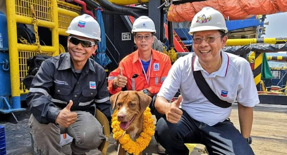 Un grupo de trabajadores dejó de lado sus funciones al divisar a un perrito en el medio del mar. (Foto: Facebook Vitisak Payalaw)
