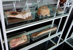 Tailandia: Una panadería que vende 'huesos y cabezas' [VIDEO]