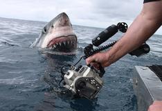 Fotógrafo tuvo un espeluznante encuentro con un tiburón blanco en aguas australianas