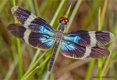 Expedición virtual: un paseo por la biodiversidad del Parque Nacional Madidi