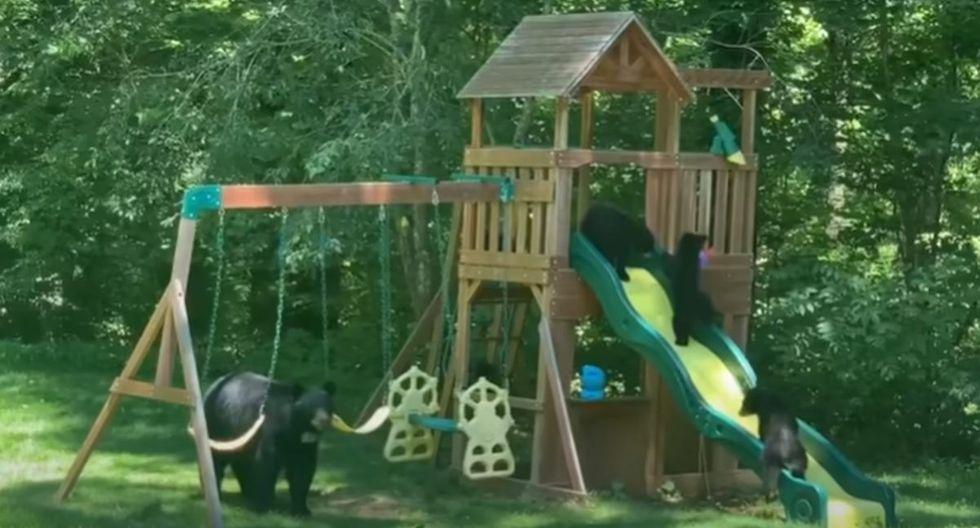 Foto 1 de 3 | La familia de osos pasó un divertido momento dentro de una propiedad. (YouTube: ViralHog)