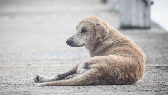 Facebook Viral | El difícil rescate de un perro en medio de la carretera (Foto: Design Foto / Pixabay)