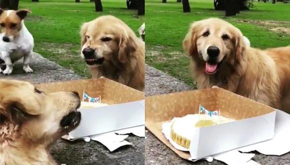 Le cantan cumpleaños a perrito malcriado pero se niega a compartir la torta. (Facebook)