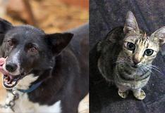 WUF: Especialista en medicina veterinaria asegura que ni perros ni gatos transmiten el COVID-19 a humanos