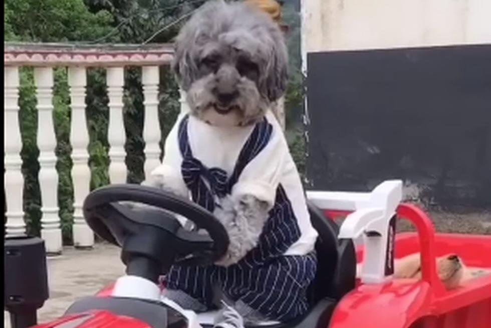 Perro se comprota como humano y se convierte en viral en Facebook. (Foto: Captura)