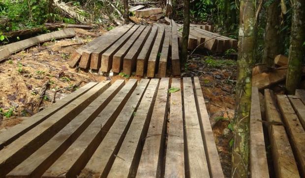 Madera extraída ilegalmente en territorio de Santa Rosillo de Yanayaku. Foto: Rondas indígenas del Bajo Huallaga.