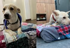 Resy: conoce la iniciativa que ayuda a los albergues de animales a través del reciclaje