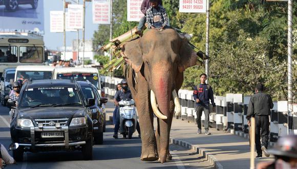 Un mahout monta un elefante entre el tráfico en Guwahati, India, el 3 de diciembre de 2020. (Foto referencial, Biju BORO / AFP).