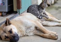 ¿Adoptar un perro o un gato? ¡Descubre qué mascota es para ti!
