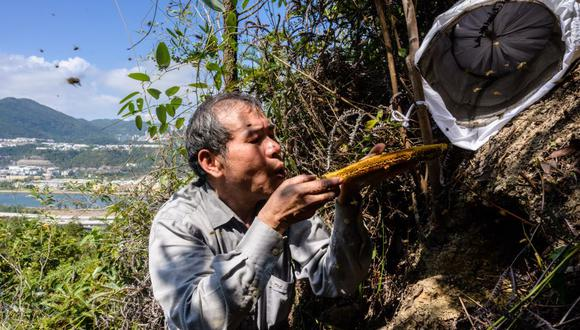 Yip Ki Hok se mueve lenta y cuidadosamente, luego sopla en la colmena para reunir a las abejas en una jaula de alambre cubierta con una bolsa blanca con cordón. (Foto: AFP)