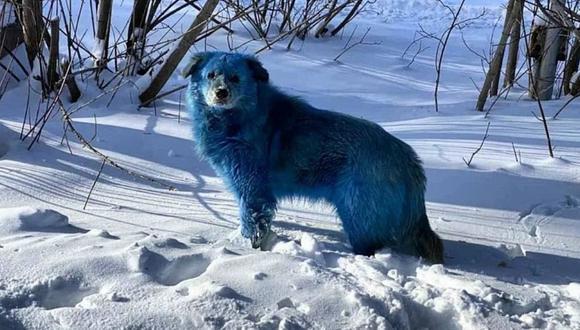 Aparición de perros callejeros azules asombra a los habitantes de una ciudad rusa. (Foto: recyclepointsbh / Instagram)