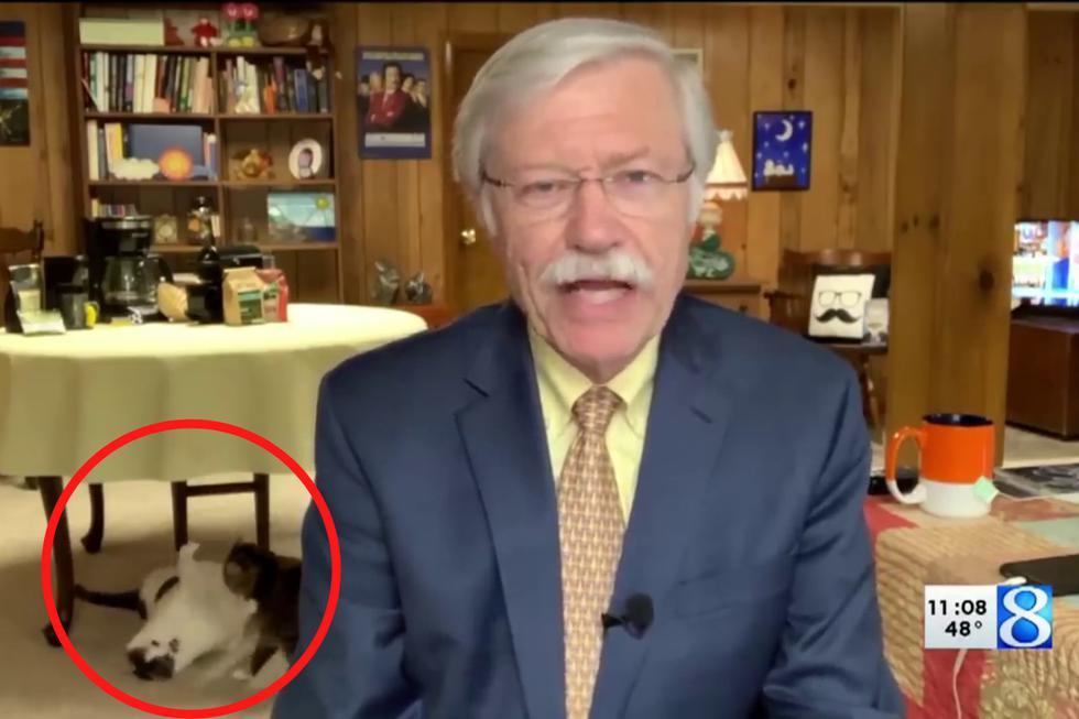 Un meteorólogo se convirtió en una celebridad en Internet no por sus precisos reportes del clima sino por sus gatos peleoneros. (Fotos: WOOD TV8 en YouTube)