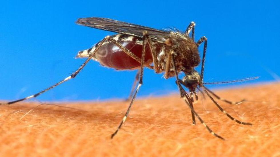 Suben a siete los casos importados de fiebre chikungunya - 2