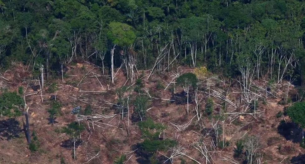 Deforestation in the Brazilian Amazon reaches record reaching 1,180 km2 in May