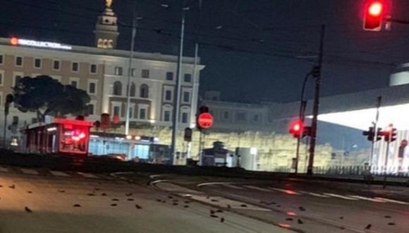 Imagen de las aves muertas en las calles de Roma, Italia. Autoridades habían prohibido los fuegos artificiales. (Captura de video/Twitter).