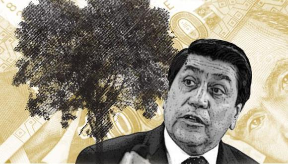 La gestión del alcalde Augusto Cáceres Viñas no tomó en cuenta que las condiciones de Lima no son las adecuadas para el desarrollo de la quina. (Composición: Luis Huaitan/GEC)