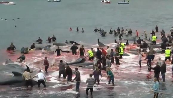 Masacraron a 180 ballenas durante ritual en las Islas Feroe. (Foto: captura de video)