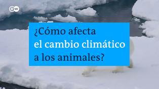 ¿Cómo afecta el calentamiento global a la naturaleza?