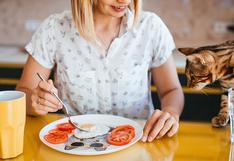 WUF: ¿Deberías alimentar a tu mascota con comida casera?