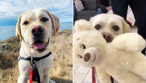 El adorable can visitó una tienda donde pudo escoger las partes para confeccionar su nuevo juguete favorito. (Foto: service.dog.mushu en Instagram)