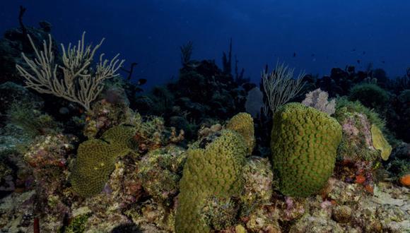 A 1,5 °C, el 75 % de los arrecifes de coral morirá, a dos grados prácticamente todos los arrecifes de coral desaparecerán.