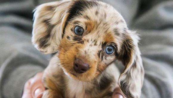 Así de tierno fue el primer baño de Rosie, un cachorro raza salchicha. | Foto: @dodgerandrosie
