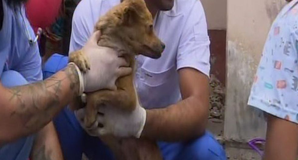 Veterinarios en diálogo con Canal N, indicaron que algunas mascotas fueron trasladados a un nosocomio debido a los daños que presentan. (Foto: Captura Canal N)