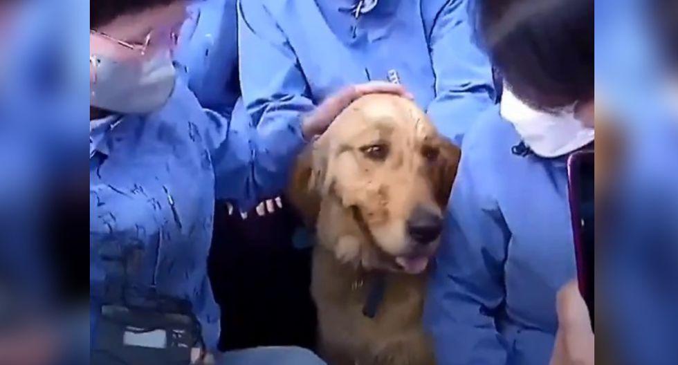 Doctores de la provincia de Shandong alimentaron y jugaron con el perro durante el tiempo que duró la cuarentena, estableciendo una gran relación con él. (Foto: Captura)