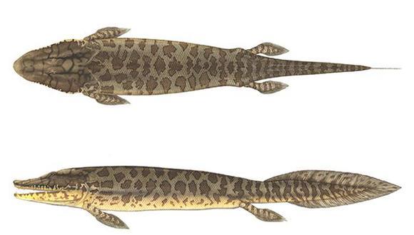 El pez tenía características tanto de peces como de tetrápodos de cuatro patas. (Flick Ford)
