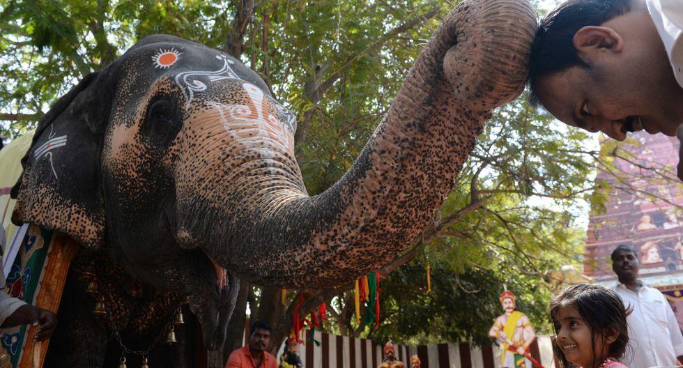 Un hombre indio recibe una bendición de un elefante en una feria espititual, en Chennai. (Foto: Arun Sankar/AFP)