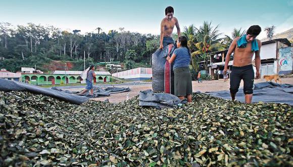 En la localidad de Palmapampa (Vraem), la economía gira en torno a la hoja de coca. La política también. (Foto: Archivo El Comercio)