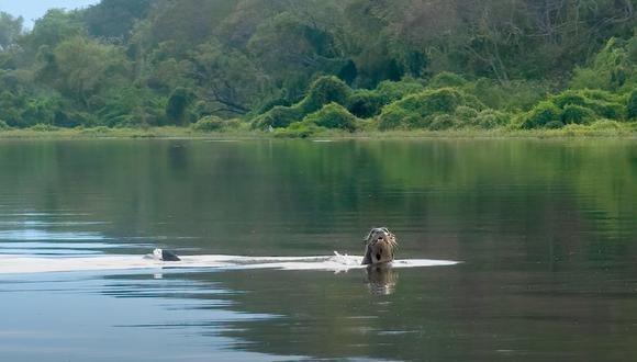 Fundación Rewilding Argentina (FRA).