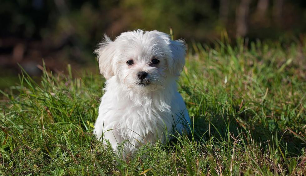 Compartir divertidos momentos con su dueño es una de las cosas que más disfruta este perro. (Foto: Pixabay)