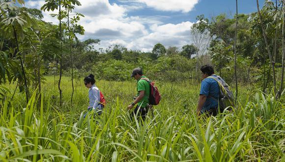 Inclusión y exclusión en la selva, por Richard Webb