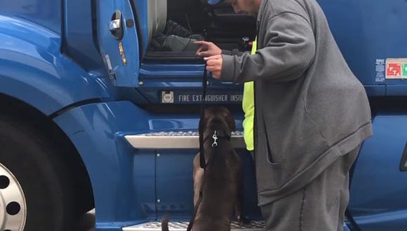 La conmovedora historia de un hombre que recorrió 4500 kilómetros para salvar a un perro. | Foto: Captura