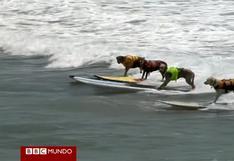 Los perros se apoderan de las olas en California [VIDEO]