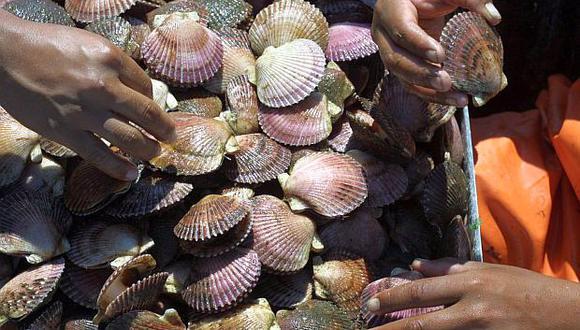 Mejora de los desembarcaderos artesanales permitirá incrementar en 20% la exportación de conchas de abanico. (Foto: El Comercio)
