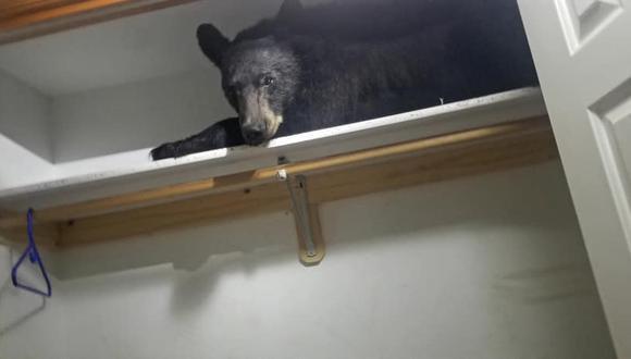 Facebook Viral: un oso negro entra a una casa en Estados Unidos y se queda dormido en el armario (Foto: Missoula County Sheriff's Office)