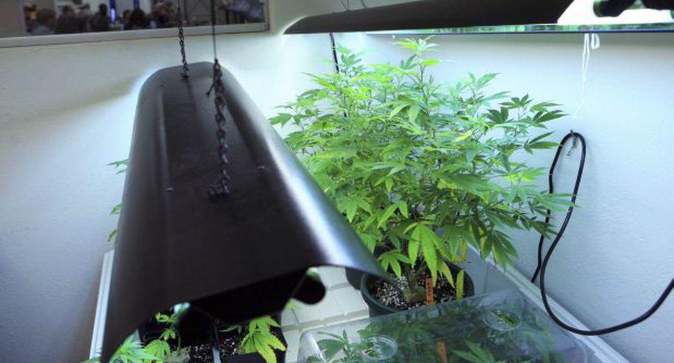 EE.UU: Colorado tendrá tienda de marihuana con servicio al auto