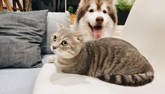 El asma en mascotas se presenta en 4 etapas. El tratamiento dependerá del caso y del paciente.