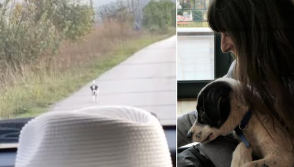 La vida del pequeño perro, llamado Bandit, cambió cuando Valia lo rescató. (Foto: The Orphan Pet en YouTube y Valia Orfanidou en Facebook)