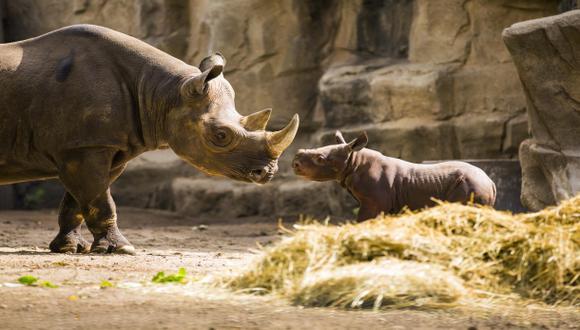 Filántropo financia protección de rinocerontes