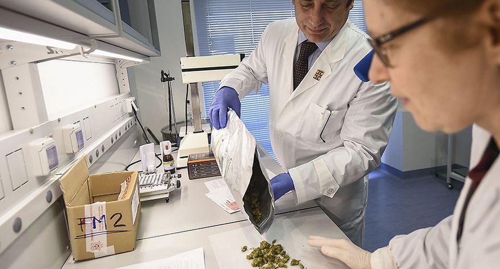 Italia encarga a militares cultivar marihuana terapéutica - 5