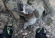 Australia: el extraordinario gesto que un motociclista tuvo con un koala en aprietos conmueve en las redes