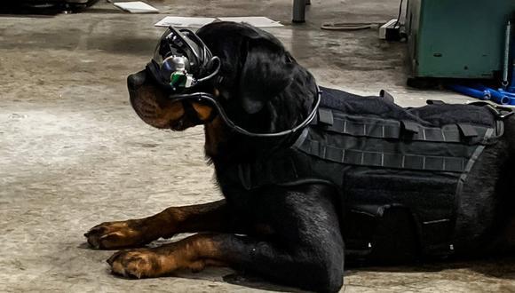 Perro militar con gafas de realidad aumentada. (Imagen: Command Sight)
