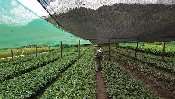 ElPrograma de Desarrollo de la Sanidad Agraria e Inocuidad Agroalimentariabeneficiará a 880,000 horticultores y 598,000 porcicultores del país. (Foto: El Comercio)