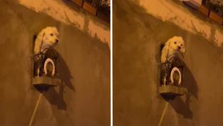 Viral: Dueños crean un balcón personalizado para su perrita en Bolivia